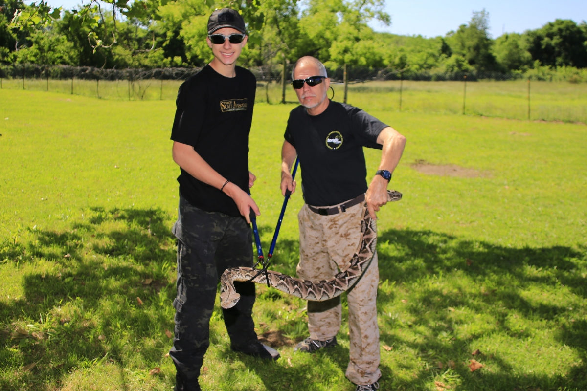 Pierce Curran and Dana Savorelli hold gaboon viper with two snake hooks